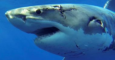 Meet the sharks