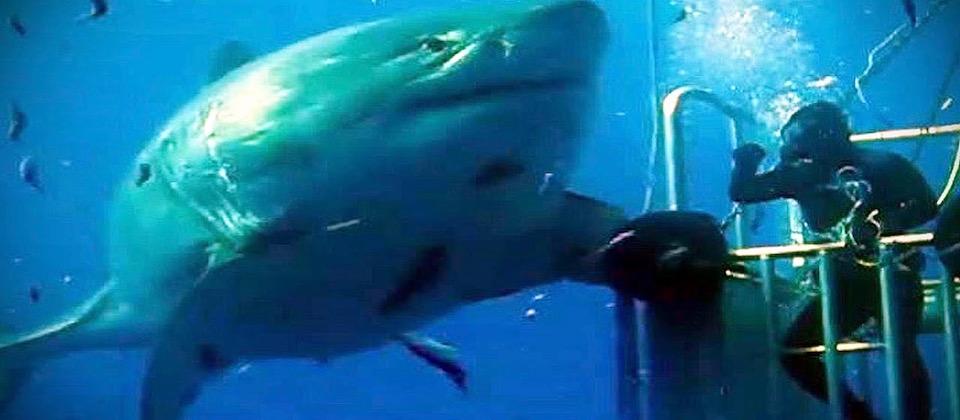 deep blue shark diving xperts