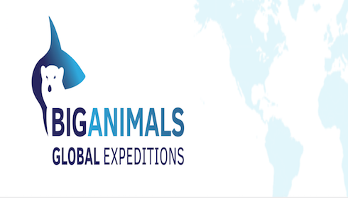Big animals global expeditions