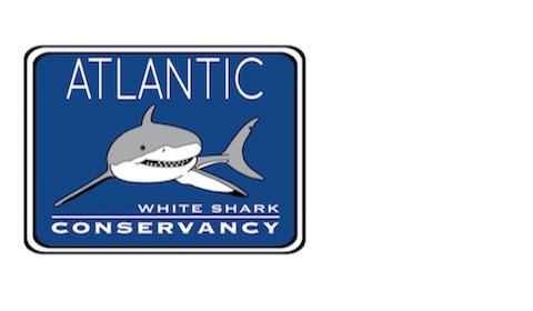 Atlantic White Shark Conservancy