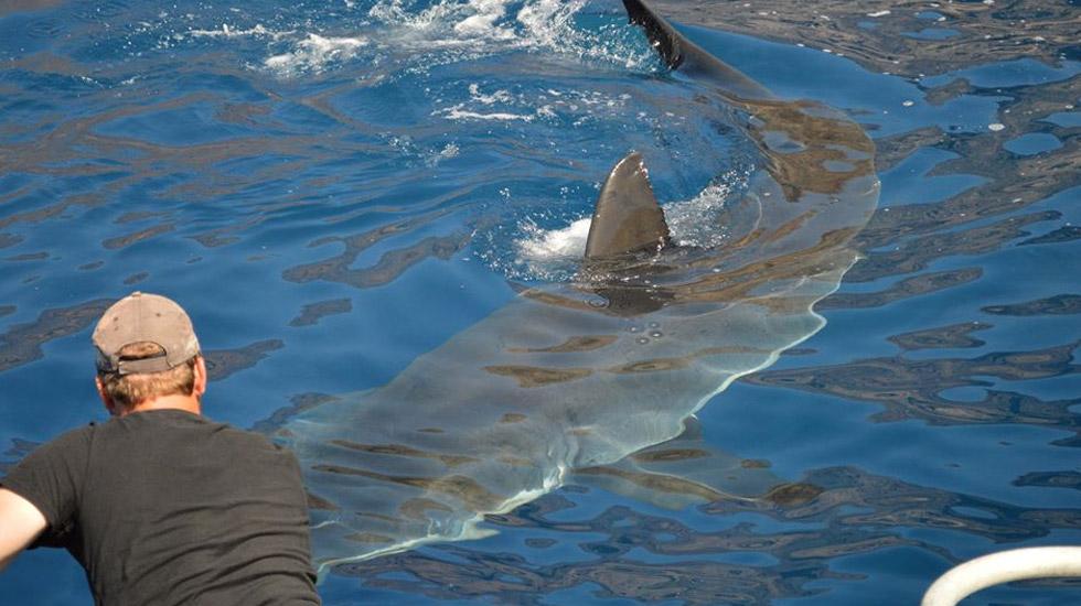International Shark Diver