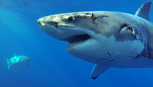Do sharks have personalities?
