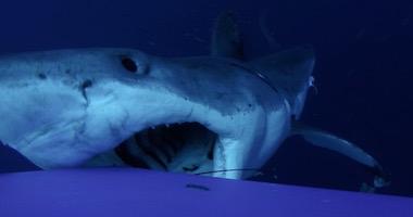 Discovery shark week 2016